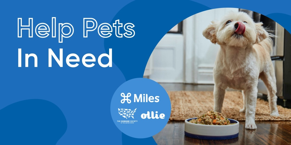 "Test on image says ""Help Pets In Need"" and displays a picture of a small tan dog licking it's lips after taking a bite of Ollie Pets food."